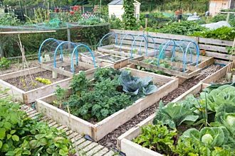 SCIENTIFIC RESEARCH ON TREATED WOOD USE FOR RAISED VEGETABLE BEDS