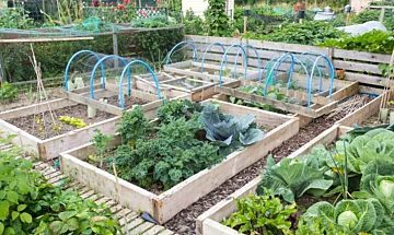 Viance treated wood can be used for raised vegetable beds.